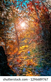 The sun peeking through the branches of trees, while highlighting the colors of orange, yellow and red leaves with sun rays.