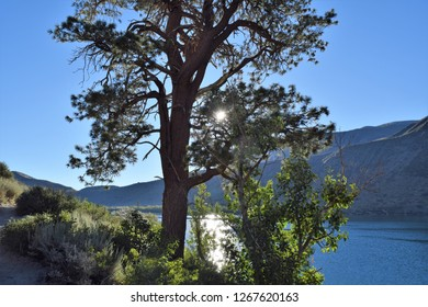 Sun peeks through tree limbs at Convict Lake's loop trail in the Mammoth