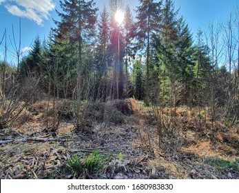 The sun peers through a canopy of tall ancient trees deep in the Forest of Dean. The sky is a brilliant blue with only a single crop of clouds interrupting its majesty. Dry woodland sits in the foregr