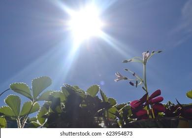 Sun Plant Images Stock Photos Vectors Shutterstock