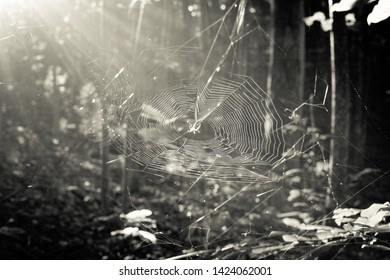 Sun provides backlighting to a spider web.