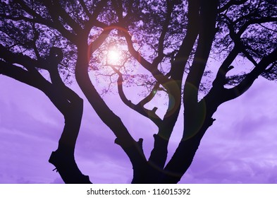 Sun in purple sky filtering through silhouette of tree.