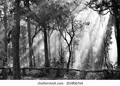 Sun ray in forest black and white