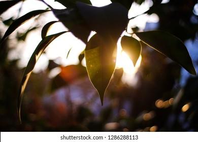 the sun rays