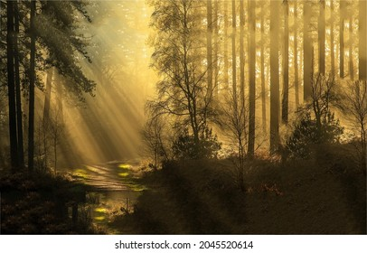 Sun rays among the shadows in the forest. Forest sunbeams. Sunbeam forest view. Sunbeams in forestland