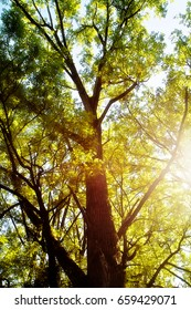 Sun rays among tree branches in summer