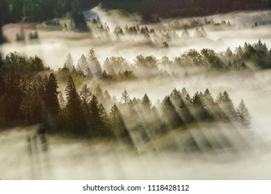 Sun Rays beaming through foggy forest in Mount Hood National Forest