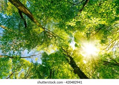Sun rays breaking through treetops