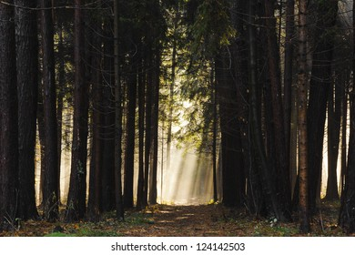 Sun rays crossing a misty forest photographed in an early autumn morning - the way to heaven