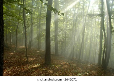 Sun rays crossing a misty forest photographed in an early autumn morning