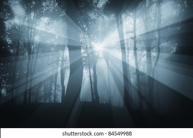 sun rays in a dark forest