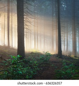 Sun rays in a dark misty forest. Osnabruck, Gemany