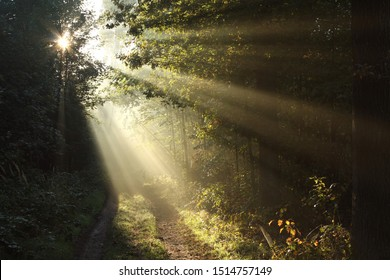 Sun rays fall through the oaks into the autumn forest surrounded by morning fog.