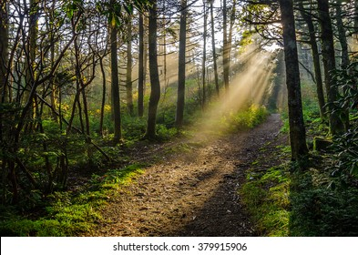 Sun rays filter through the forest canopy onto hiking trail in Tennessee