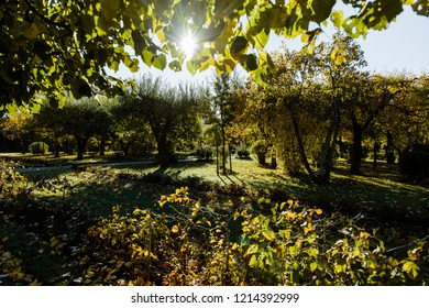 Sun rays in the garden. Background