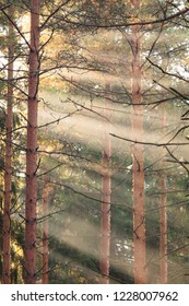 Sun rays in the middle of forest at sunrise