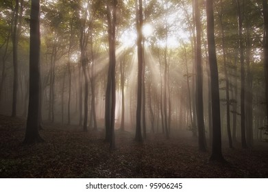 sun rays in a misty forest at sunset