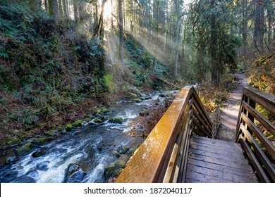Sun rays on the stairs along McDowell creek just below McDowell Falls near Sweet Home Oregon