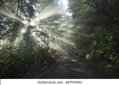 Sun rays on a track road in a golden autumn forest