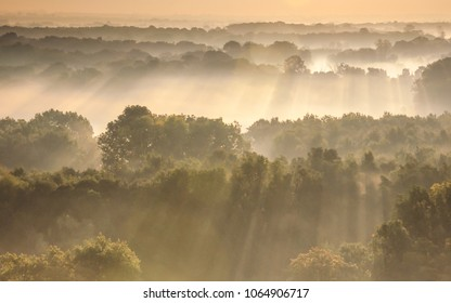 Sun rays over the forest during sunrise in South Moravia, Czech republic. Dramatic daybreak over moravian forest. Beams of light over trees during dawn. Morning mists and fog over forest.