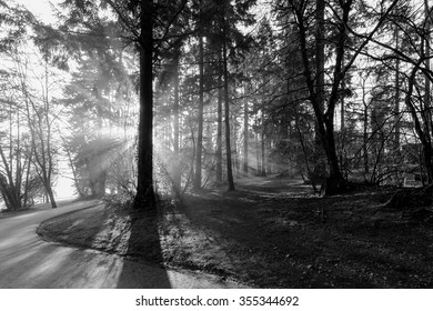 Sun rays passing in the misty woods