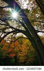 Sun rays peeking through colorful red, orange, and yellow leaves during foliage season on the East Coast