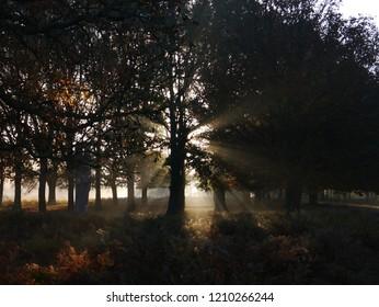 Sun rays peeking through the trees