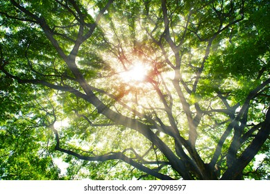 Sun rays shining through trees ,nature background