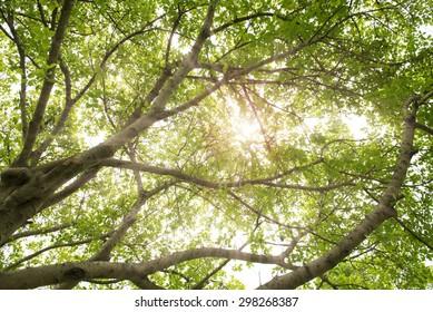 Sun rays shining through trees ,nature background