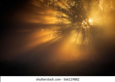 Sun rays shining through the trees early one morning.