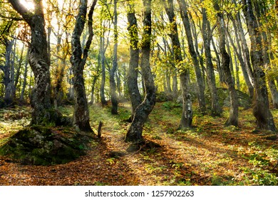 Sun rays that pass through dense forest foliage, and illuminate the beautiful colors of the autumn. Babin zub (The Grandmather's tooth) is the most beautiful peak of Stara planina ( Balkan mountains )
