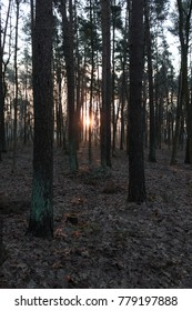 Sun rays through the forest in the autumn morning. Mysterious forest. Nature of Latvia.