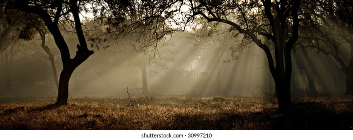 Sun rays through forrest trees
