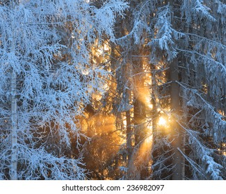 Sun rays through frosty trees