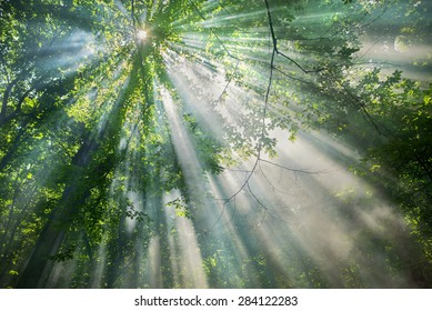 sun rays through the trees in the forest