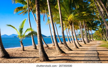Sun rise at a beautiful tropical beach with palm trees.