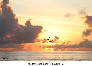 sun rise with birds beautiful sky