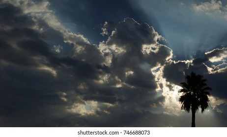 sun rise with clouds and palm tree
