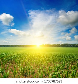 Sun rise over the corn field.