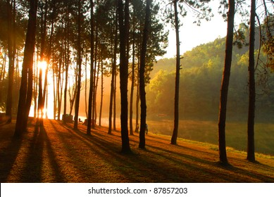 Sun rise at Pang-ung, Pine forest in Thailand.