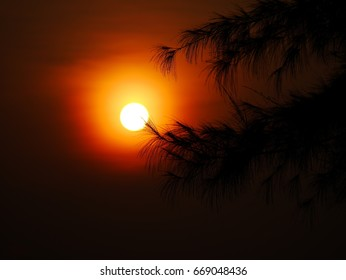 sun rise and silhouette leaves