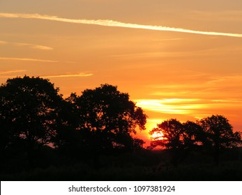 Sun rise through English Oak trees