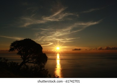 Sun rise with tree