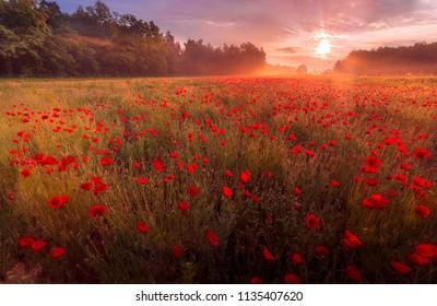 Sun rises above poppy field in slovenia.
