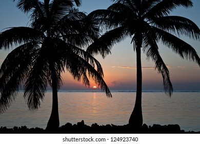 The sun rises between a pair of Coconut palms (Cocos nucifera) on a beach off of Belize.