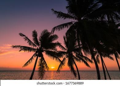 Le soleil se lève sur les distances qui silhouent les palmiers sur la côte de Cayo Guillermo à Cuba.