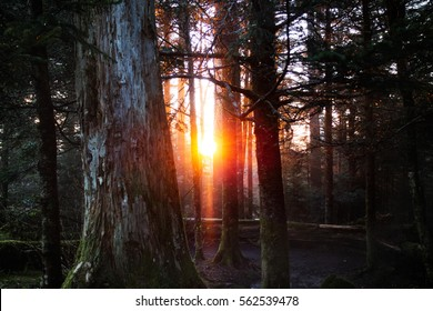 The sun rises in the Great Smoky Mountain National Park.