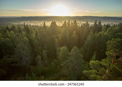 Sun rises in the horizon at the Torronsuo National Park in Finland. Morning mist on the swamp creates painterly atmosphere.