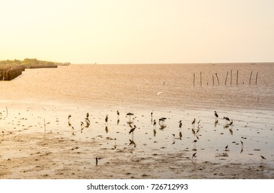 The sun rises at the mangrove forest, an important time of the coastal ecosystem. There are fish, poultry, birds, crabs, as well as other animals that feed and expand.
