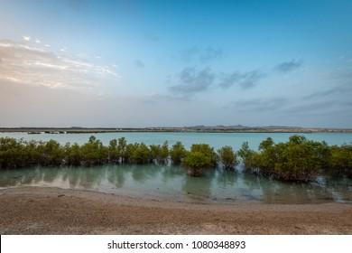 Sun rises over iconic Sir Bani Yas mangroves